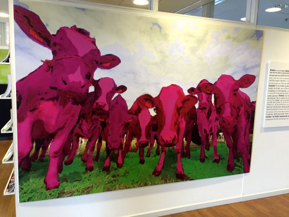 Roze koeien kunst.